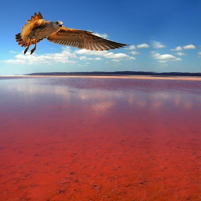 Хиллер, Австралия