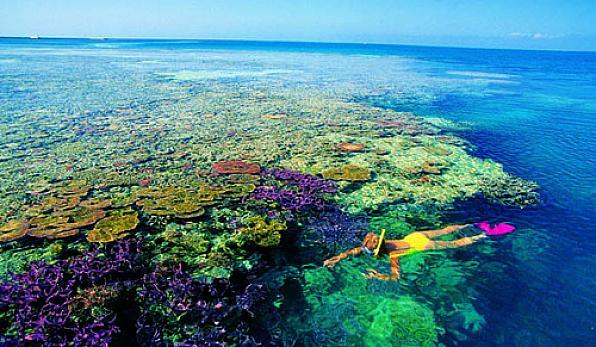 дайвинг большо риф