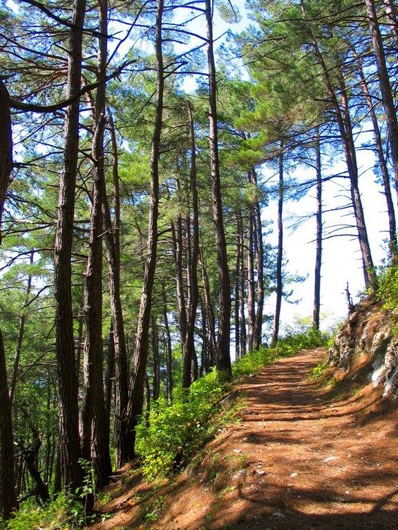 дорога в горах