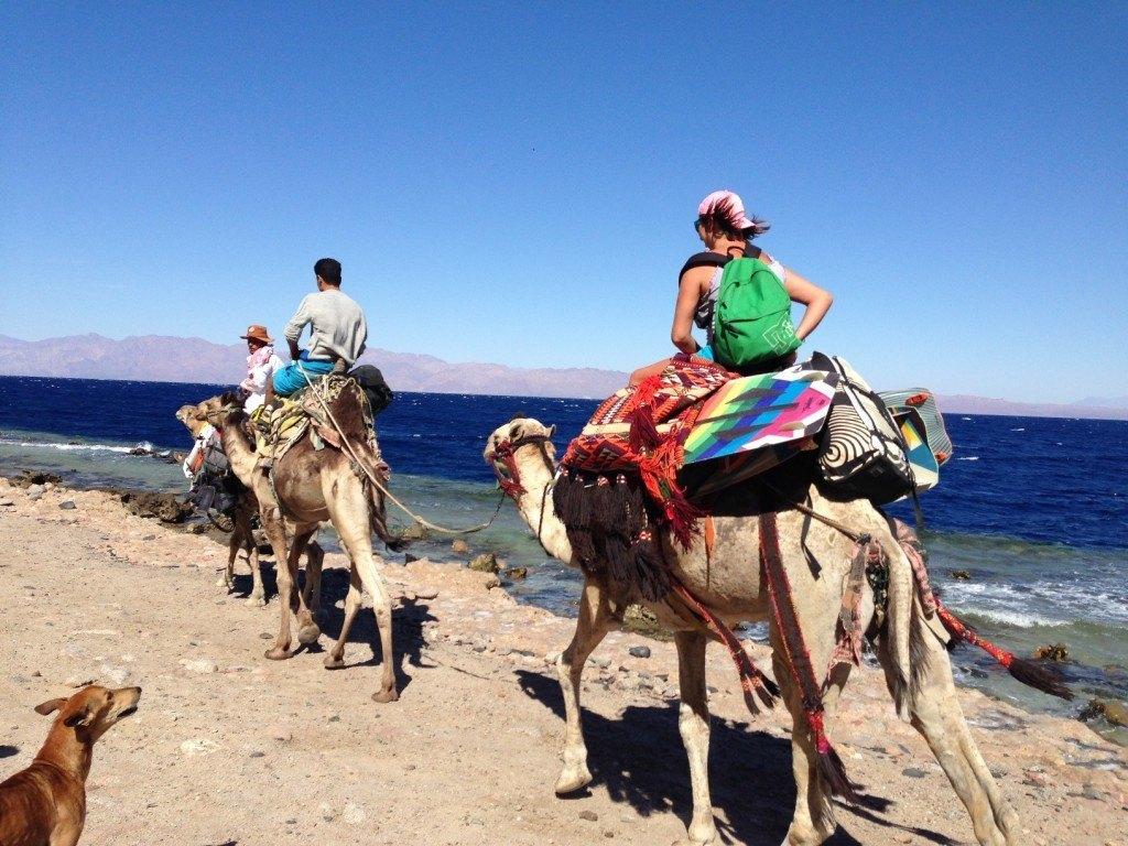 Экскурсии на верблюдах