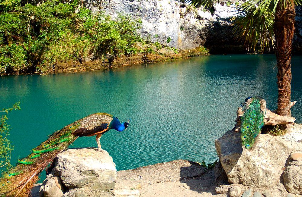 Голубое-озеро-Абхазия3