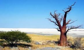 Климат Ботсваны