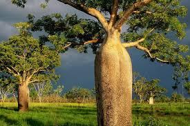 Растительный мир. Австралии2