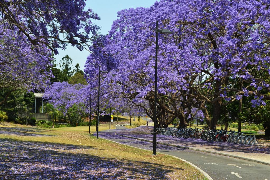 Весна в Австралии