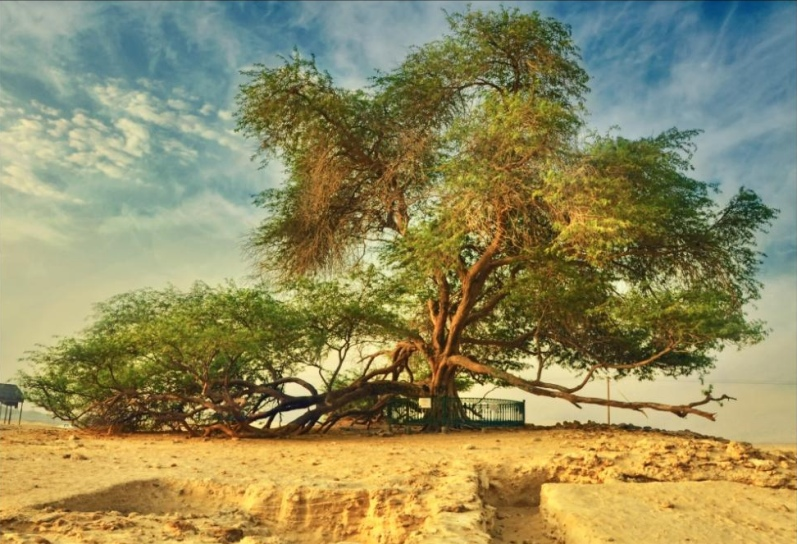 дерево жизни днем